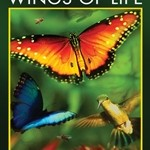 Wings of Life DVDR NTSC Español latino