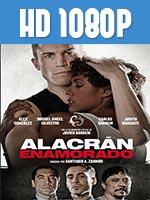 Alacrán Enamorado 1080p HD