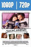 Social Animals (2018) HD 1080p y 720p Latino