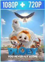 Ploey: Cabeza de chorlito (2017) HD 1080p y 720p Latino