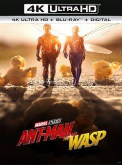 Ant-Man and the Wasp (2018) 4K Ultra HD Latino Dual