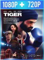Tiger (2018) HD 1080p y 720p Latino
