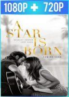 Nace una estrella (2018) HD 1080p y BRRip 720p Latino Dual