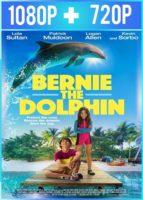 Bernie el delfín (2018) HD 1080p y 720p Latino