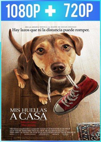 Mis huellas a casa (2019) HD 1080p y 720p Latino Dual