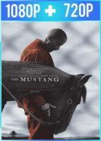 The Mustang (2019) HD 1080p y 720p Latino Dual