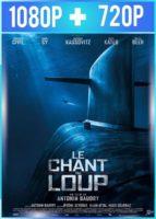 El Canto Del Lobo (2019) HD 1080p y 720p Latino