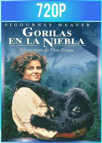Gorilas en la niebla (1988) HD 720p Latino Dual