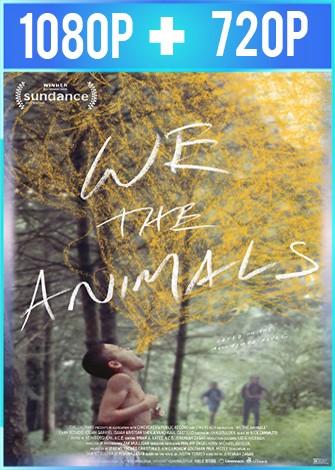 Nosotros, los animales (2018) HD 1080p y 720p Latino Dual
