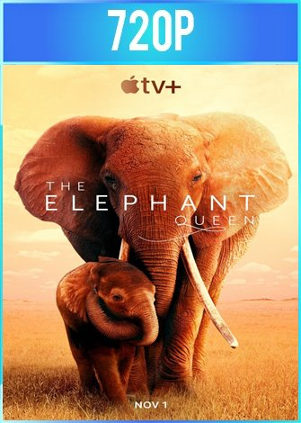The Elephant Queen (2019) HD 720p Latino Dual