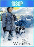 Colmillo blanco (1991) HD 1080p Latino Dual